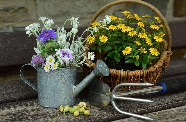 可愛いお花を育てたいならガーデニング
